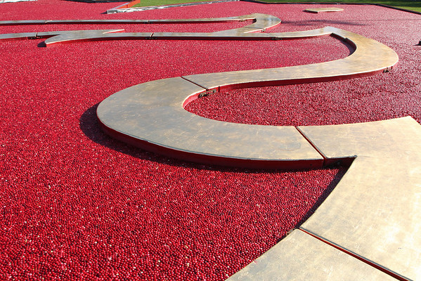 An Olympic moment from the events surrounding the Vancouver 2010 games. This is an abstraction from a huge Maple Leaf, filled with Cranberries.It was shot on February 18th, 2010 and you can see at the top that it sits on a large lawn just across from the richmond city Hall.