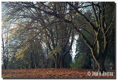 1707_2000035-R5-C4-NCS-BritishColumbia.jpg : Autumn in Stanley Park, Vancouver, BC