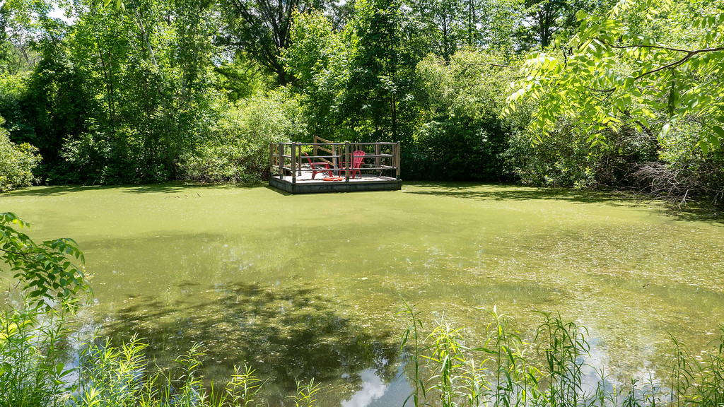 Dugout Pond at Ball's Falls