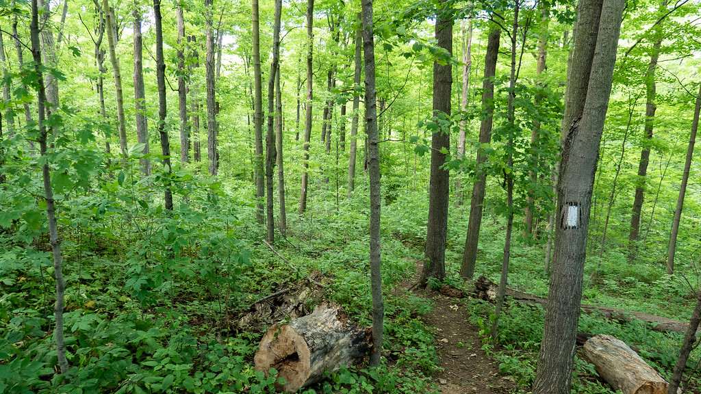 Hiking the Bruce Trail in Niagara wine country - Dense forest near Vineland Ontario