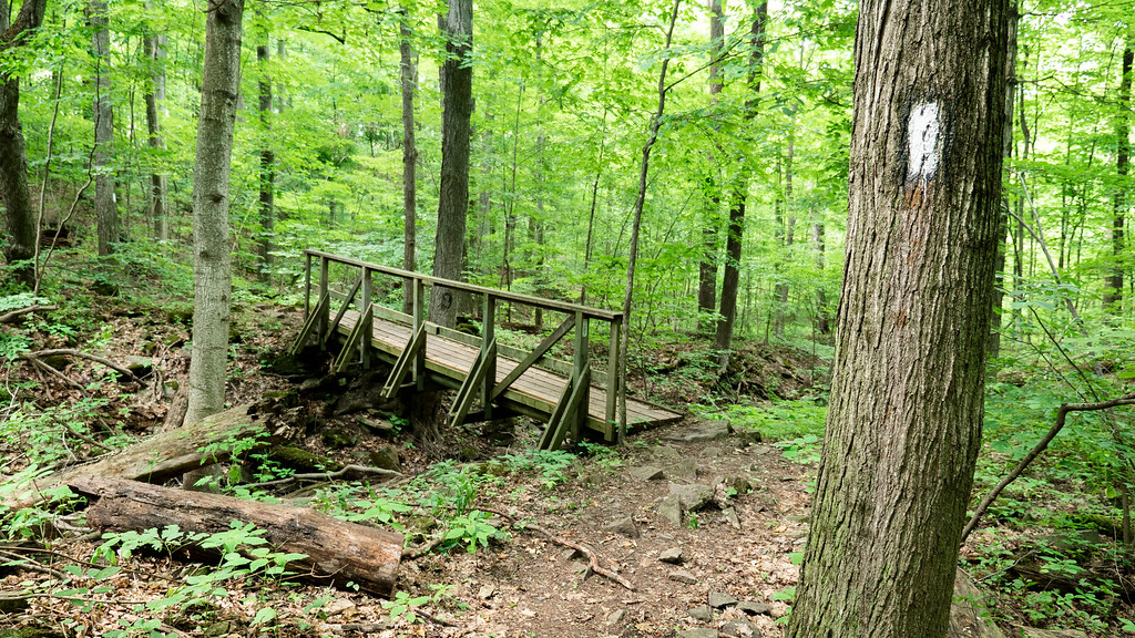 Hiking the Bruce Trail in Niagara wine country - Forest and little bridge