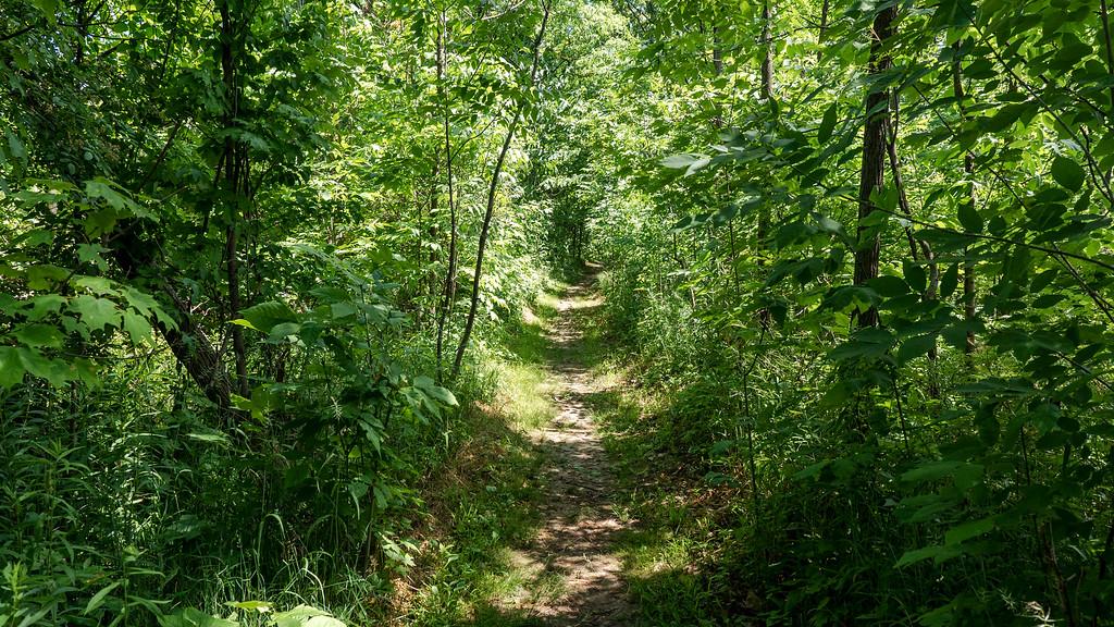 Bruce Trail near Ball's Falls