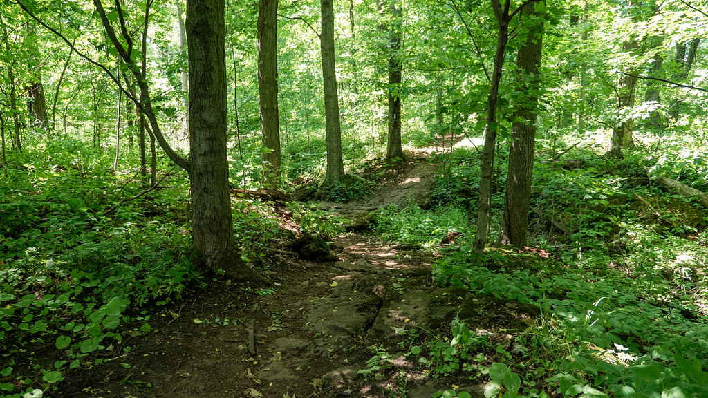 Hiking through the forest in Niagara region