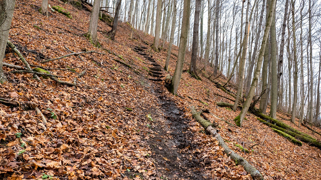 The hill at Cave Springs Conservation Area