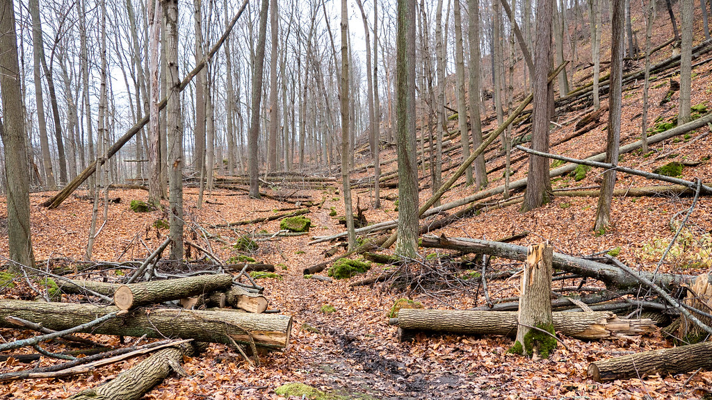 Bruce Trail from Cherry Ave to Quarry Rd, Niagara section (Cave Springs Conservation Area)