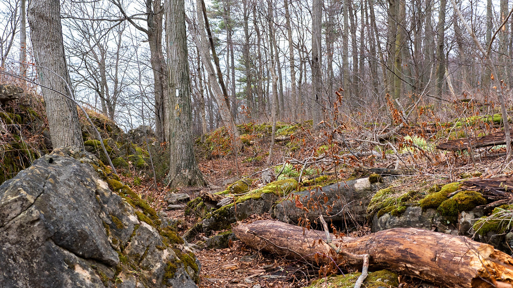 Cave Springs Conservation Area in Niagara Region on the Bruce Trail