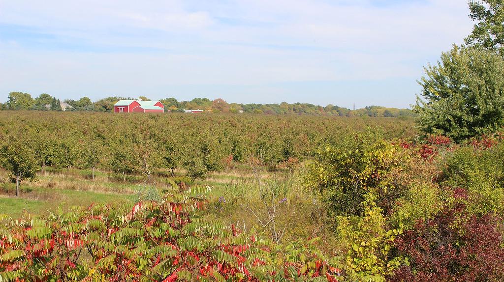 Meadows and farmland in Niagara Falls, Ontario