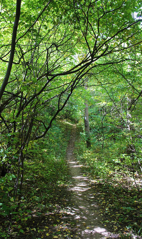 Small path through a very green forest
