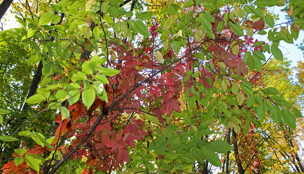Beginnings of fall in late September on a hiking trip in Ontario Canada