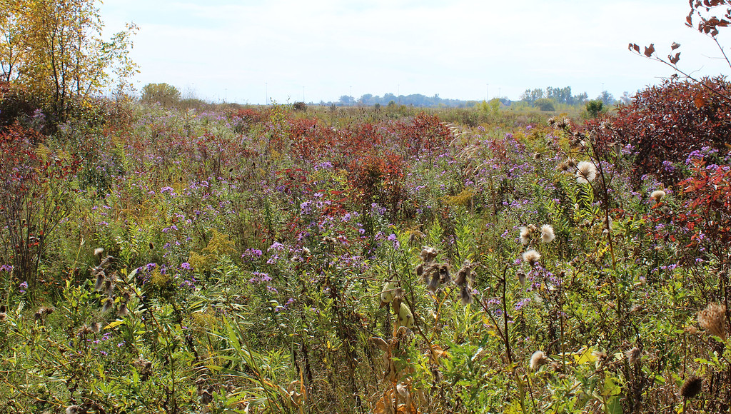 Reaching an overlook with meadows and colorful weeds