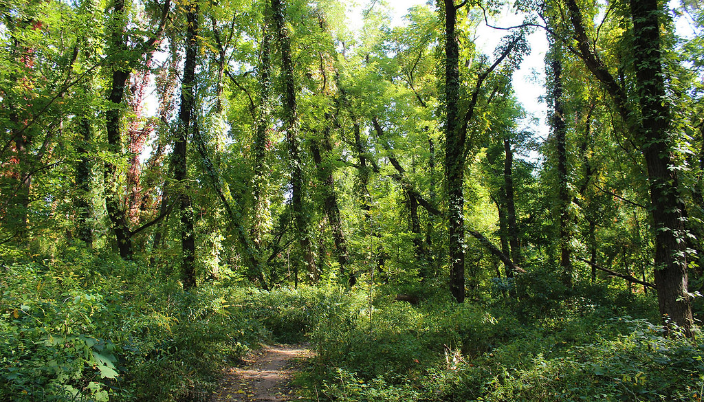Hiking the Bruce Trail in Niagara Falls Ontario