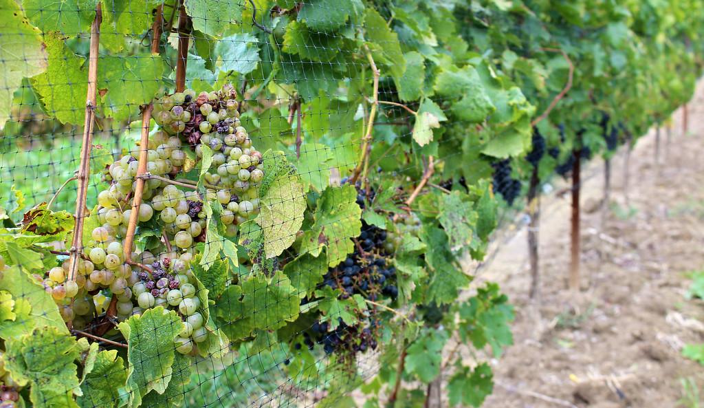Hiking in Wine Country Niagara - Bruce Trail