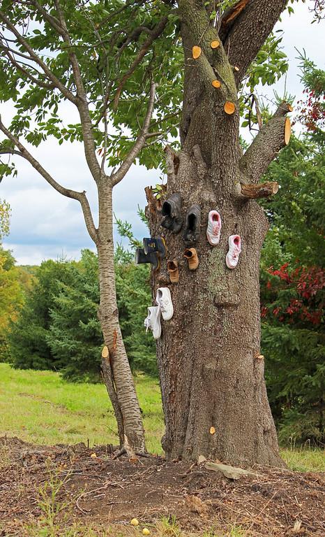 Shoe tree Niagara on the Lake