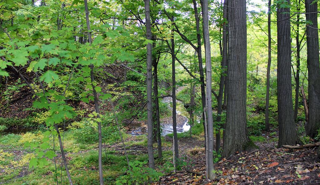 The Bruce Trail in the Niagara region