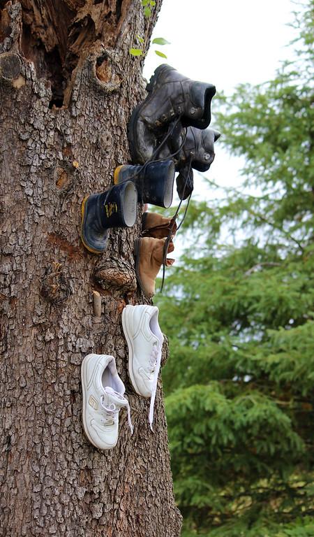 Shoe Tree Niagara Falls