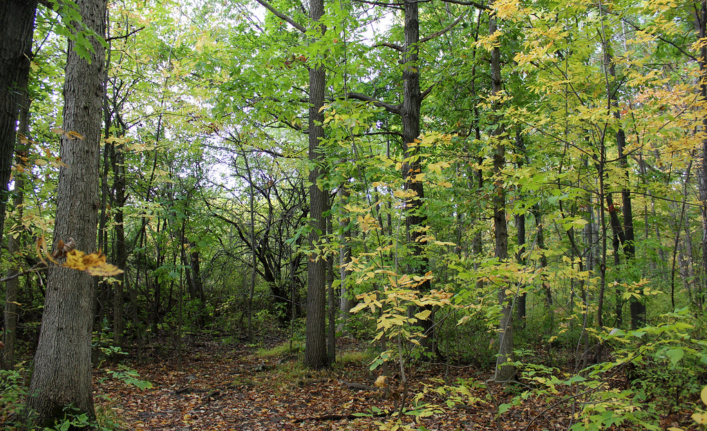 Fall forest on the Bruce Trail
