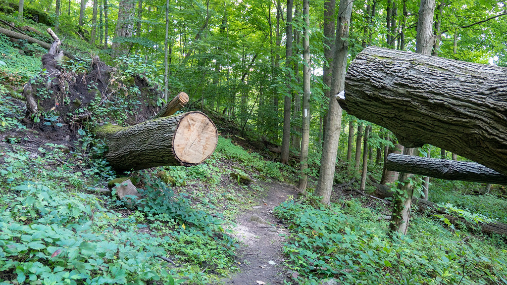 Log cut in half on the path - Louth Conservation Area