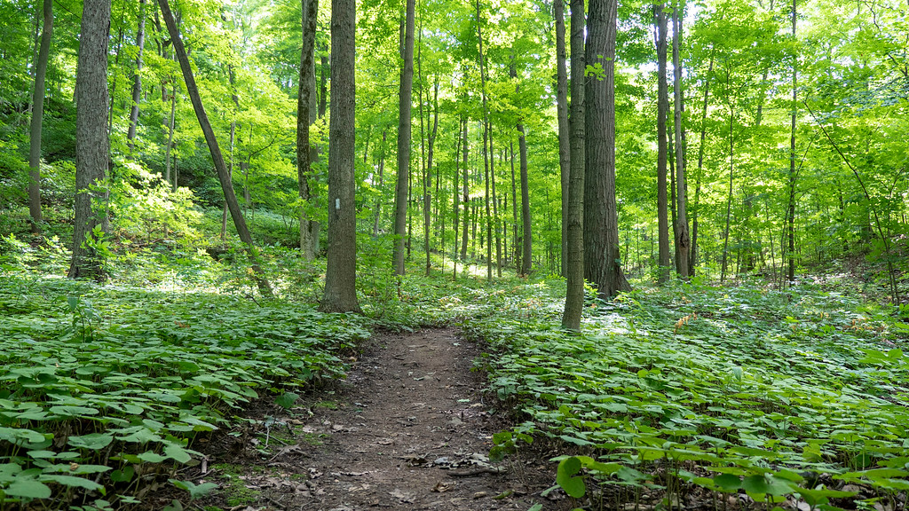 Bruce Trail hiking - The Niagara Club