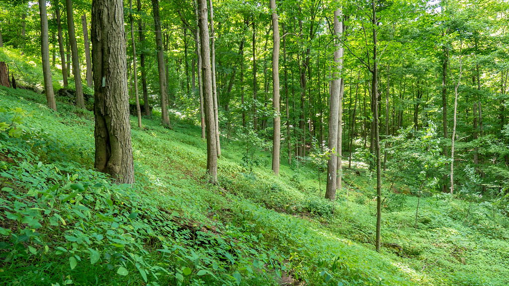 Beautiful forest and reroute of the Bruce Trail in Niagara