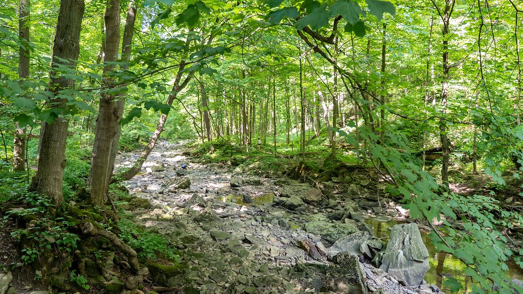 Dried up creek on the Bruce Trail in Rockway Conservation Area