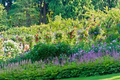 Butchart Gardens-0445