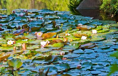 Butchart Gardens-0389