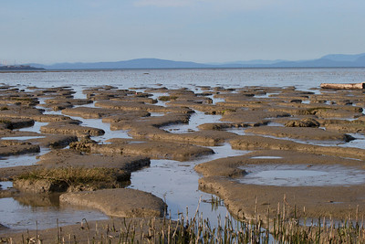 The mud flats at low tide, Boundary Bay, Ladner, BC. Offshore, thousands of Western Sandpipers and Dunlins wait for the receding tide to feed in the Biomass.