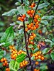 Ripe Summer Berries
