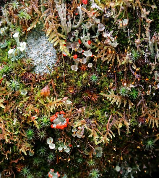 Consolation Trail Fungi_vPanorama0 x2 Enh