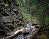 Hamilton Creek & Cliffs