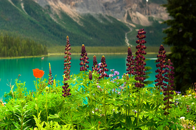 Emerald Lake Flowers