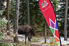 Moose and Canada150 Sign