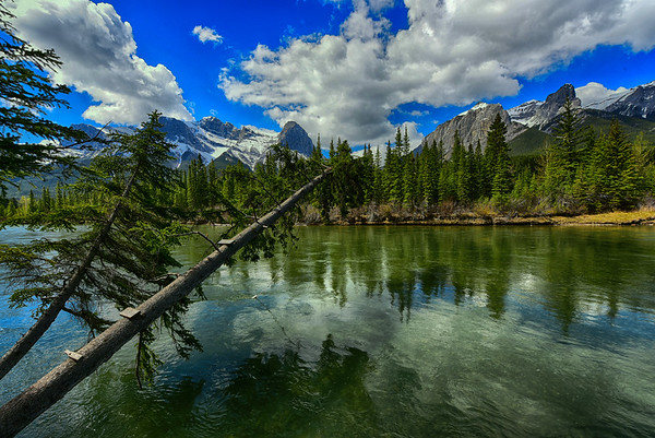 Bow River and mountains and leaning tree