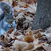 "A squirrel with a nut in its hand on a cool fall afternoon - Fredericton, New Brunswick.  A travel photo from Fredericton (New Brunswick) Canada. <a href=""http://nomadicsamuel.com"">http://nomadicsamuel.com</a>"