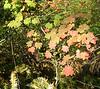autumn colors <br /> Harrison Hot Springs