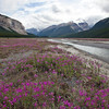 Purple Wildflowers on Icefield Parkway Vertical