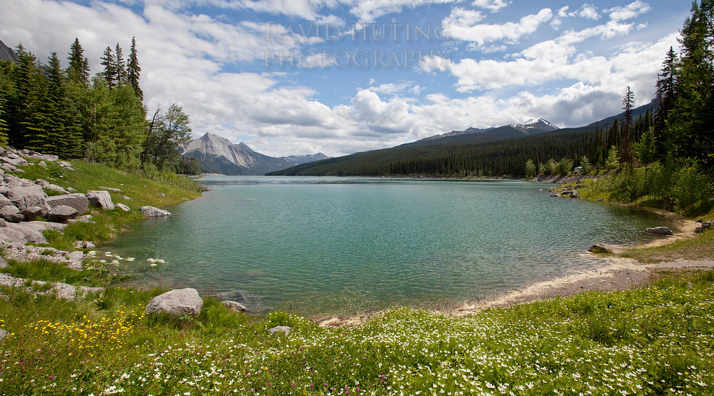 Medicine Lake Flowers
