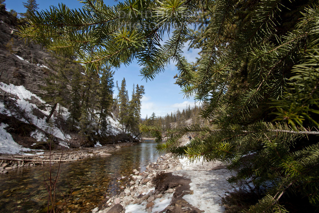 Maligne River Pine View