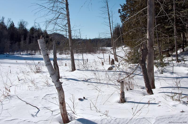 Wetlands in winter.
