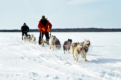 Dog sledding near Brochet