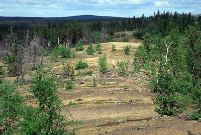 Caribou trail atop the Robertson Esker
