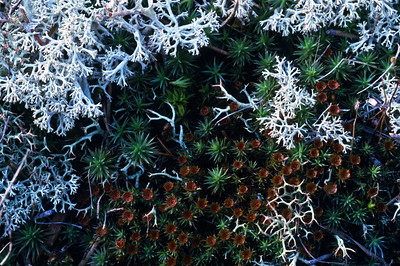 Lichen and other various flora