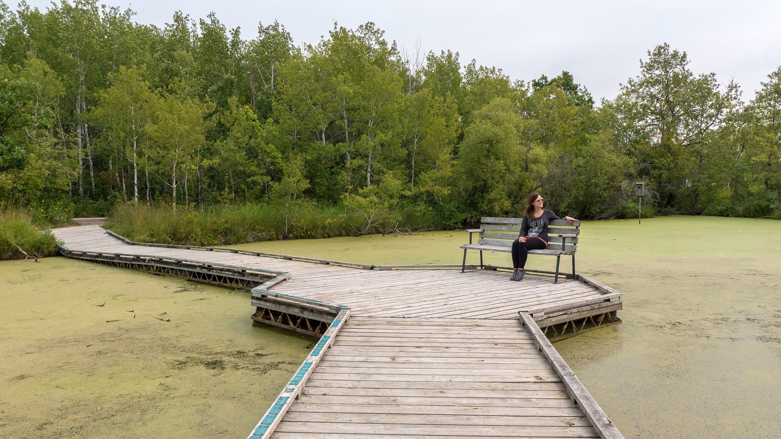 Floating boardwalks at the Wetland Boardwalk Trail at Fortwhyte Alive, Winnipeg.