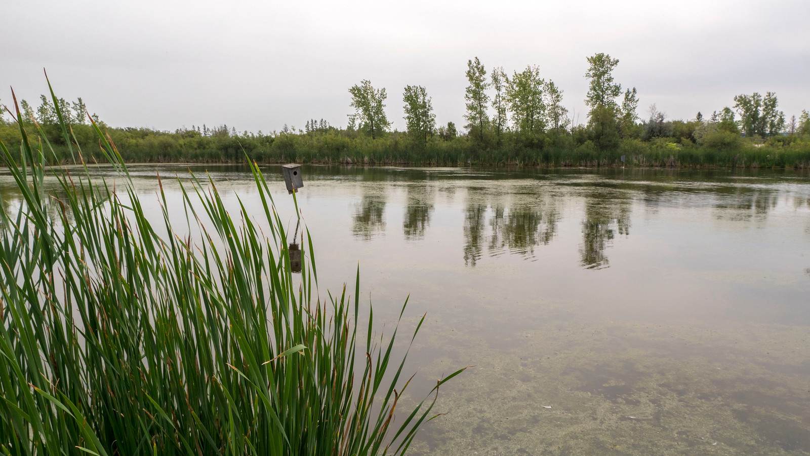 Fortwhyte Alive marsh and swamp land, Winnipeg. Things to Do in Winnipeg: A Couples Getaway Guide