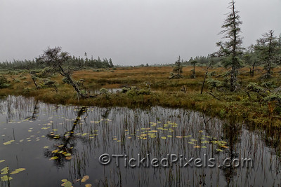 Bog in Cape Breton Highlands National Park