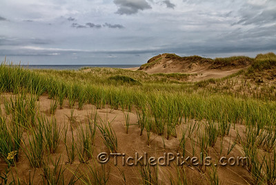 Sand Dunes - Brackley Beach