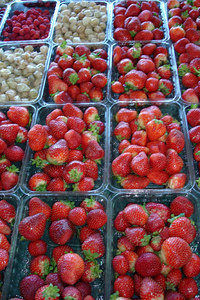 Yummy strawberries at the Marche Jean Talon - Montreal, QC ... October 8, 2006 ... Photo by Emily Conger