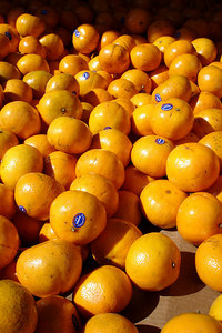 Oranges at the Marche Jean Talon - Montreal, QC ... October 8, 2006 ... Photo by Emily Conger