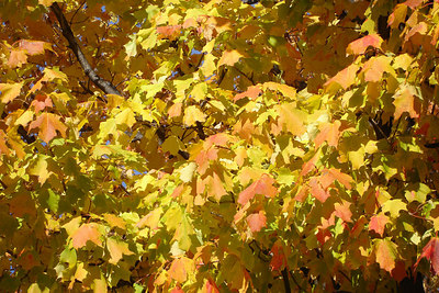 Autumn Foliage - Montreal, QC ... October 8, 2006 ... Photo by Rob Page III