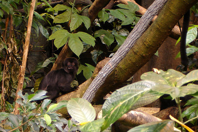 The little monkey hanging ot at the Biodome in Olympic Park - Montreal, QC ... October 8, 2006 ... Photo by Rob Page III